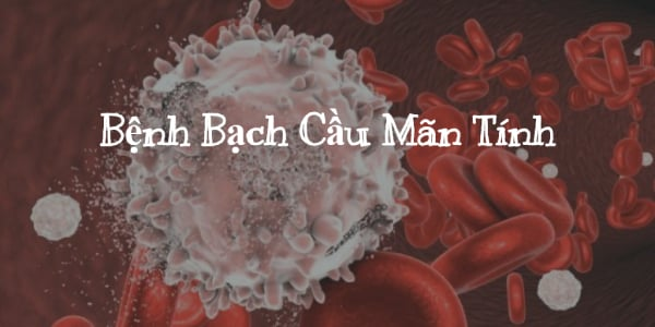 benh bach cau man tinh (1)
